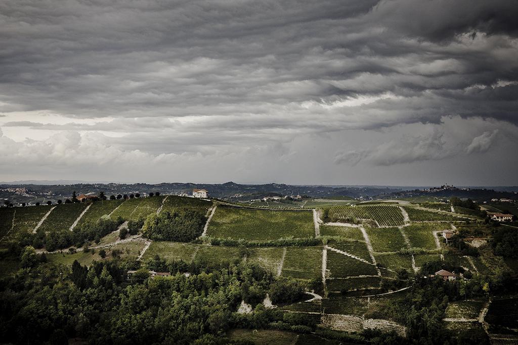 Landscape (Consorzio Barbera d'Asti e Vini del Monferrato)