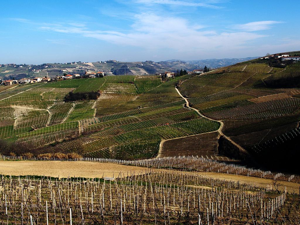 Landscape in Consorzio Barbera d'Asti e Vini del Monferrato
